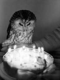 It's the birthday owl!
